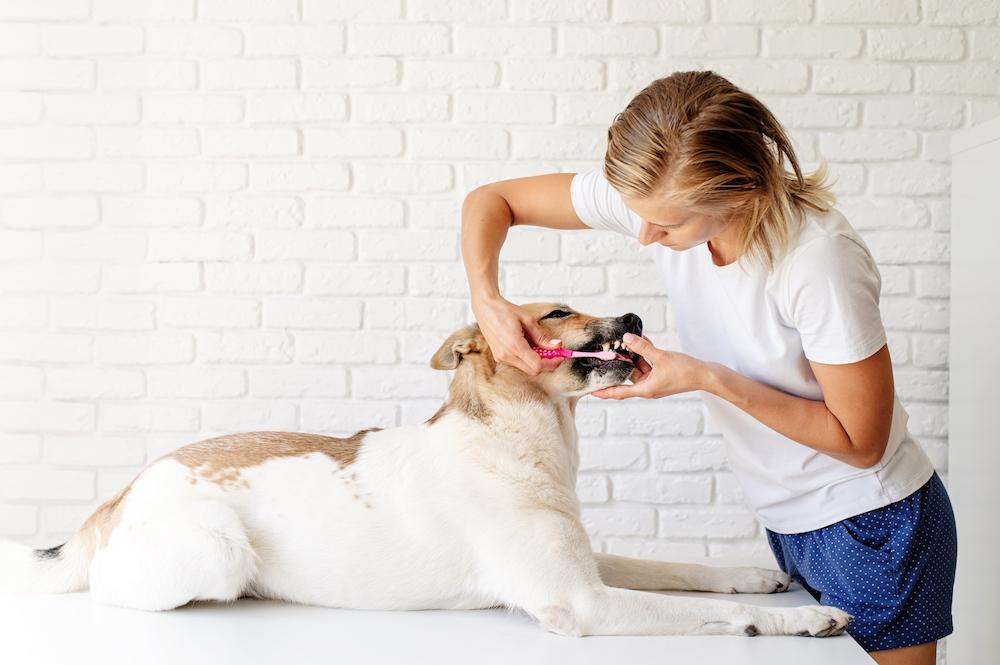 犬の歯磨きをしている飼い主