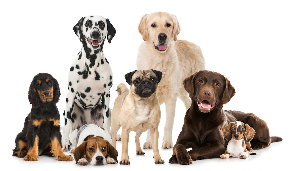 犬種ごとの維持費