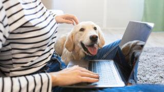 犬の飼育費用