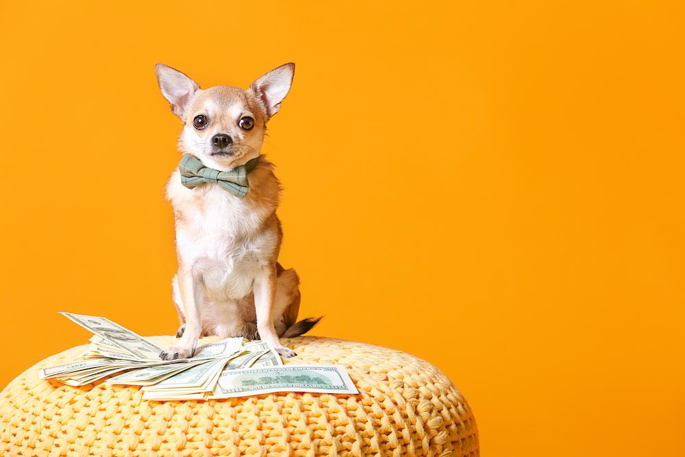 犬にかかる初期費用