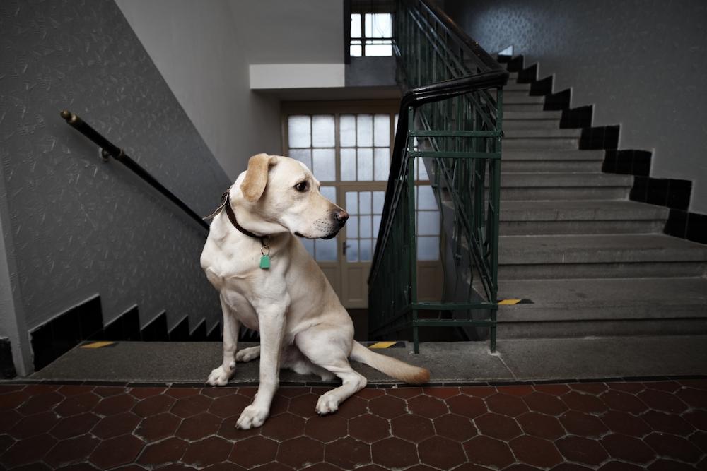 マンションの階段を歩く犬
