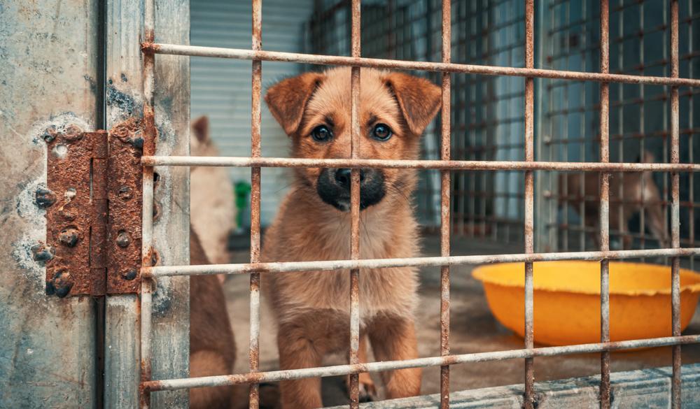 飼育放棄された犬