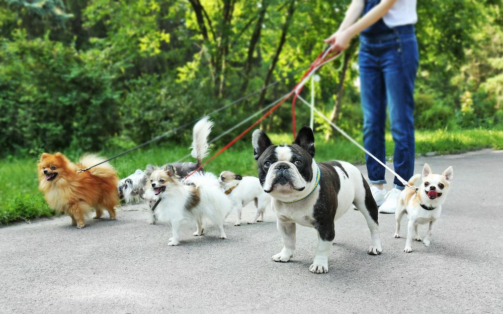 犬を公園で散歩させている女性