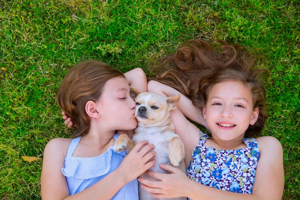 犬と家族の絆