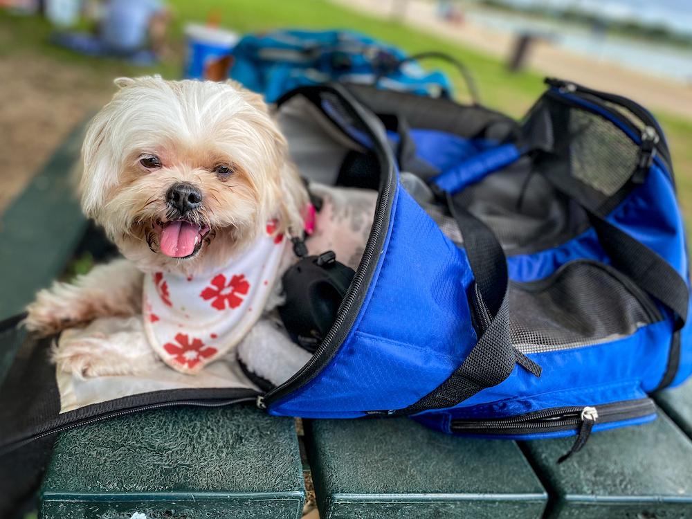 犬用のバッグ