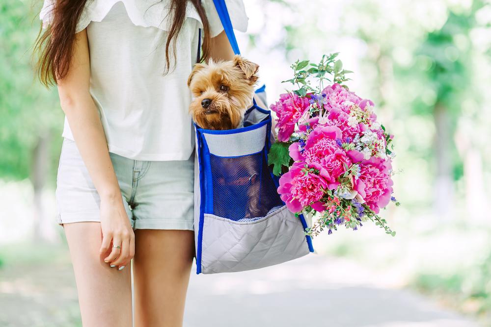犬のお散歩バッグ