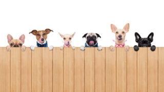 犬の種類一覧
