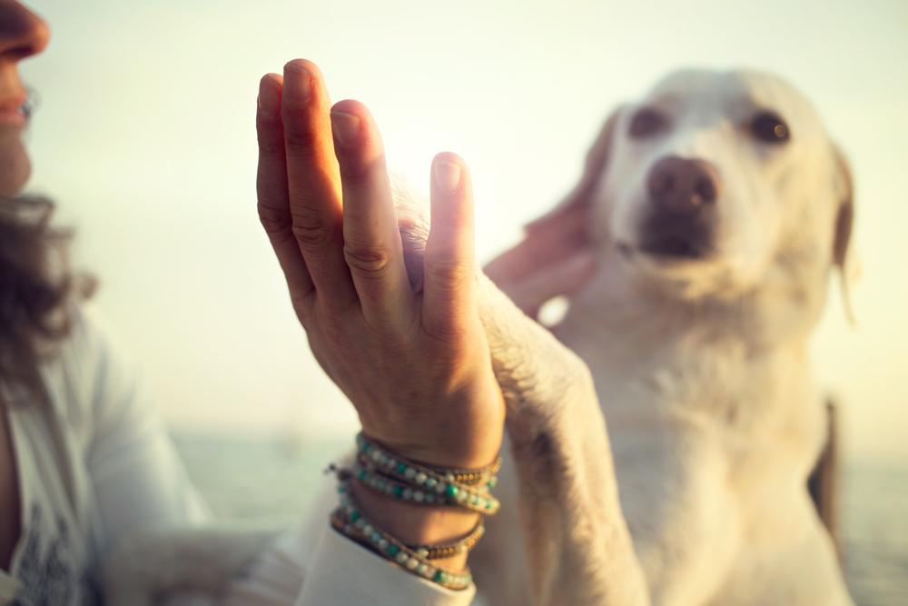 ミックス犬と飼い主さん