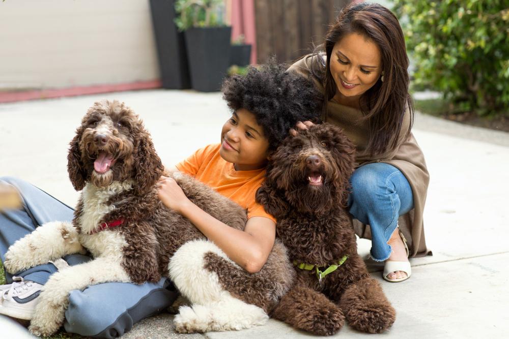 ミックス犬と遊ぶ家族