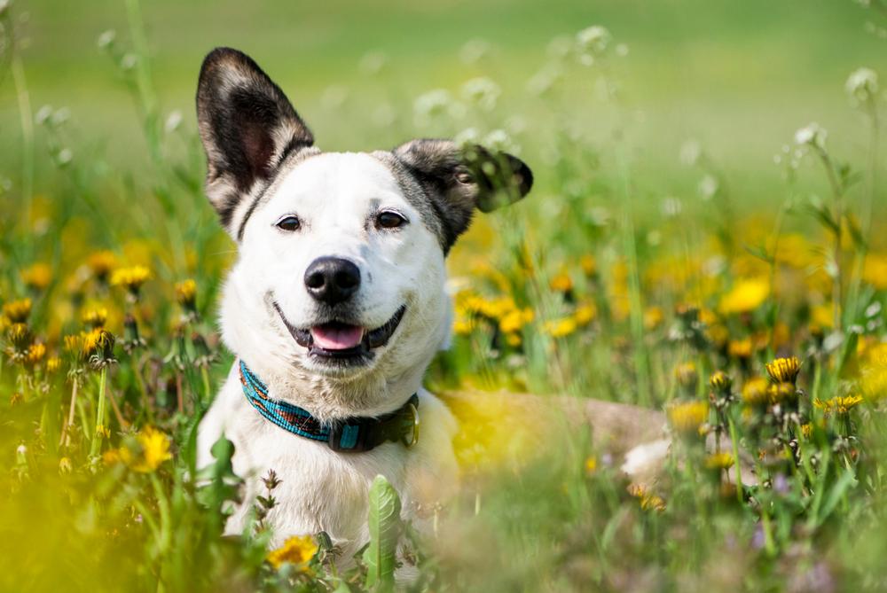 かわいいミックス犬